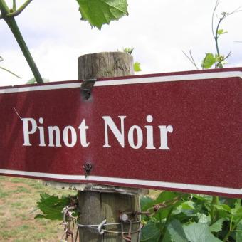 trinkreif-Paket des Monats: Pinot Noir