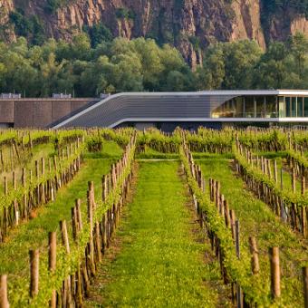 Im Fokus: Weingut F.X. Pichler - 600 Flaschen, über 30 Jahrgänge