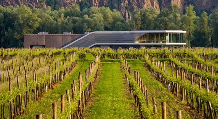 Im Fokus: Weingut F.X. Pichler – 600 Flaschen, über 30 Jahrgänge