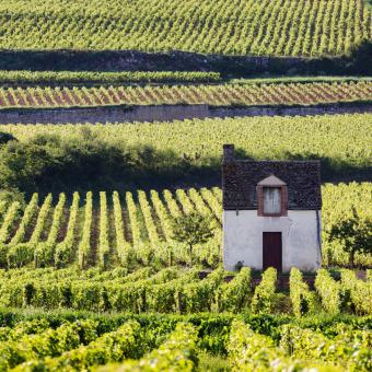 trinkreif Selektion Burgund weiß