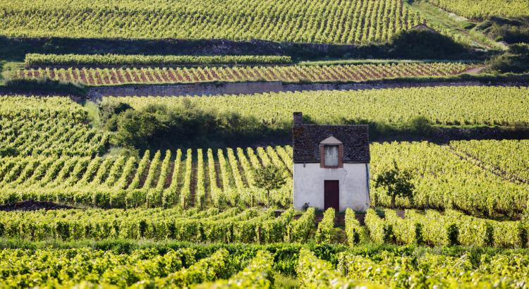 Schwerpunktpreisliste Burgund