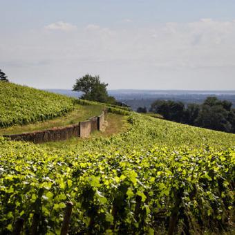 Weingut des Monats: Denis Mortet (Burgund)