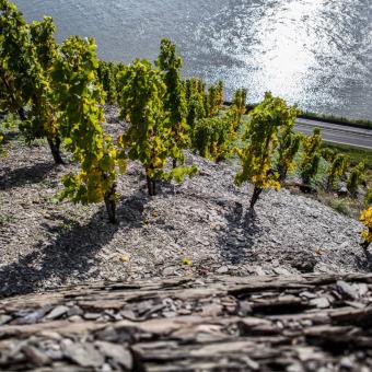 Wissenswertes über das Weinland Deutschland